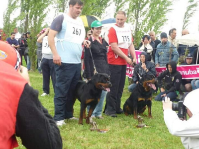 image of the Rottweiler dog Erasmus